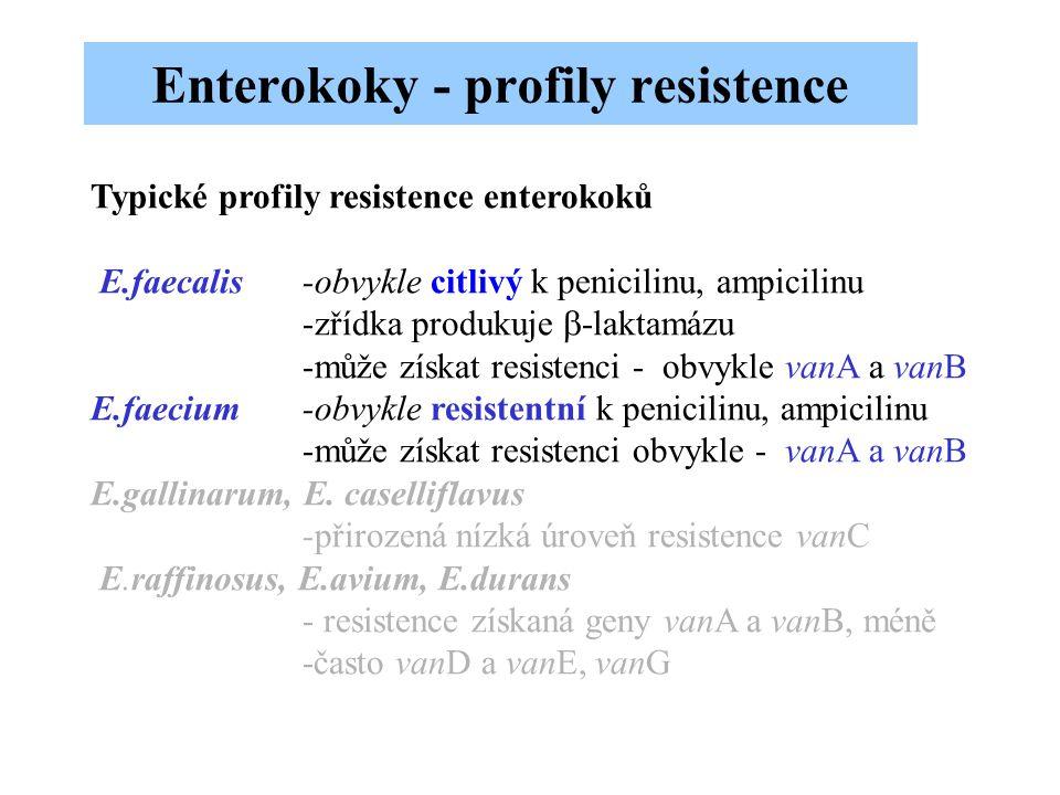 Enterokoky - profily resistence