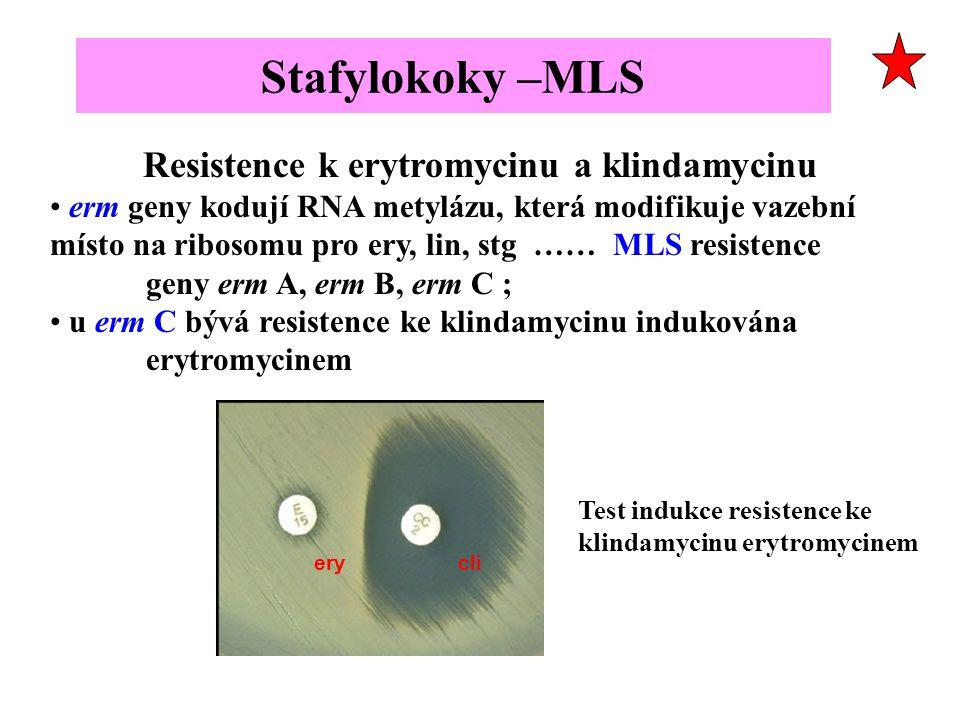 Resistence k erytromycinu a klindamycinu