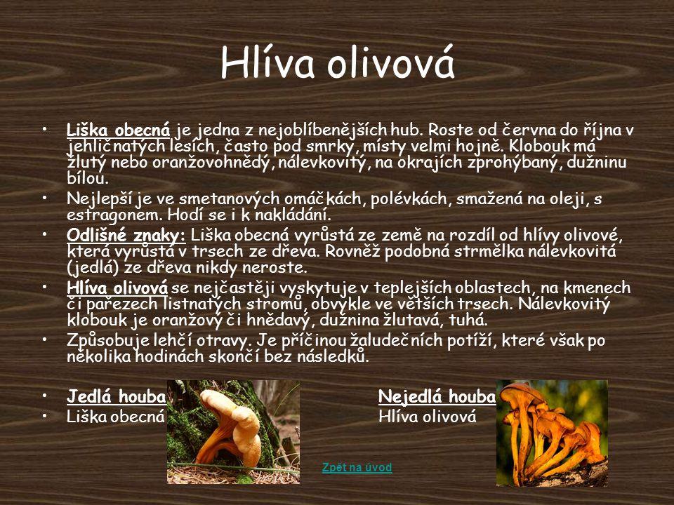Hlíva olivová