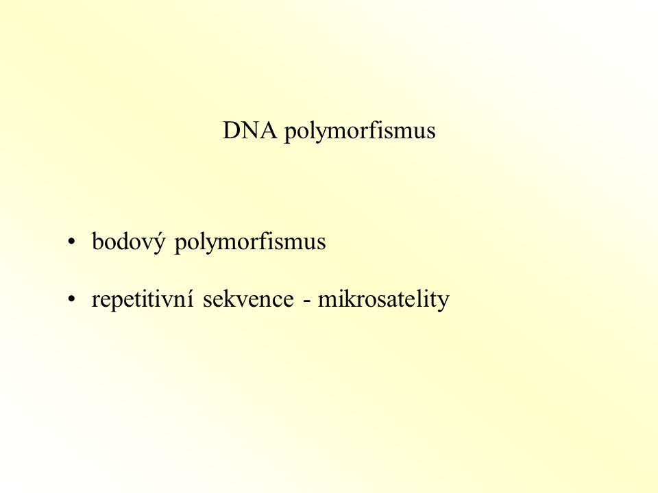 DNA polymorfismus bodový polymorfismus repetitivní sekvence - mikrosatelity
