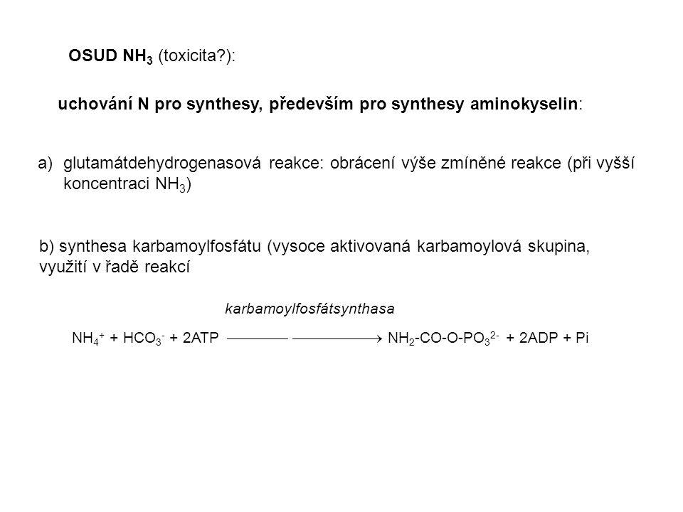uchování N pro synthesy, především pro synthesy aminokyselin: