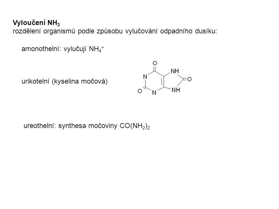 Vyloučení NH3 rozdělení organismů podle způsobu vylučování odpadního dusíku: amonothelní: vylučují NH4+