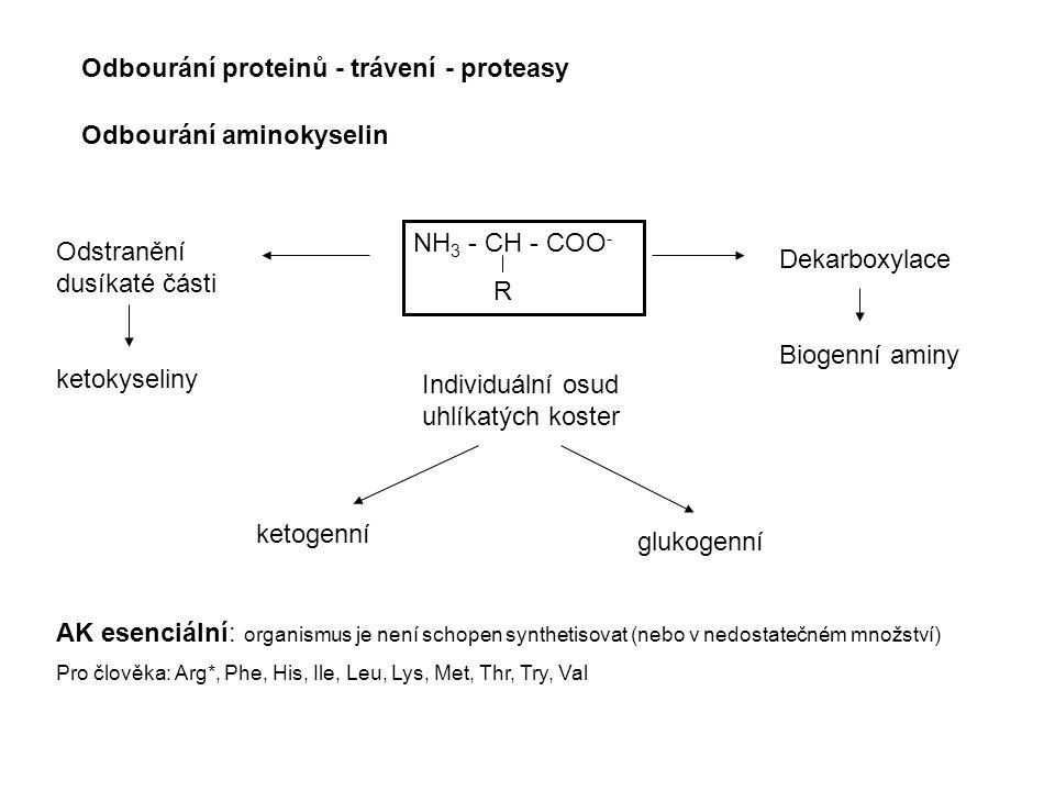 Odbourání proteinů - trávení - proteasy