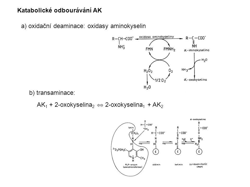 Katabolické odbourávání AK