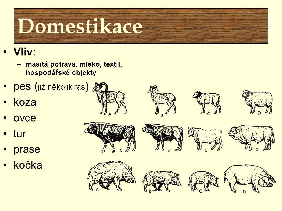Domestikace Vliv: pes (již několik ras) koza ovce tur prase kočka