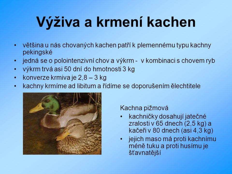 Výživa a krmení kachen většina u nás chovaných kachen patří k plemennému typu kachny pekingské.