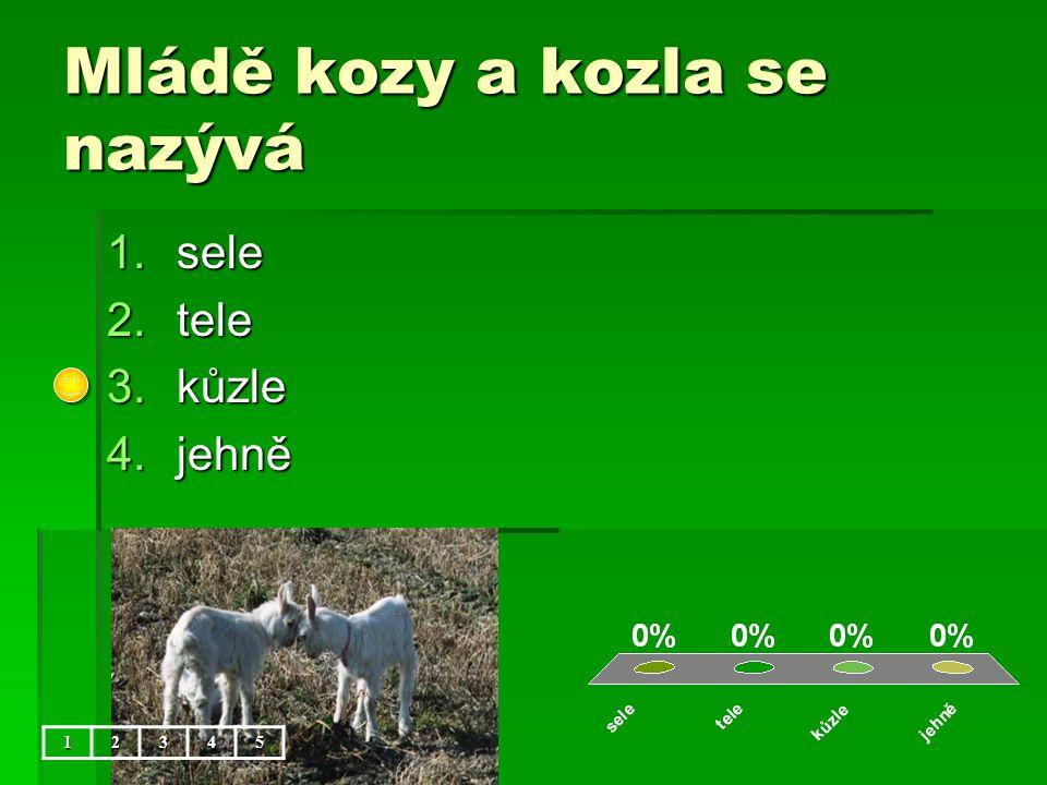 Mládě kozy a kozla se nazývá