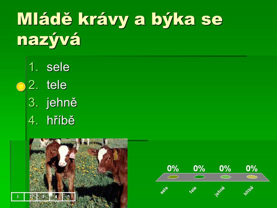 Mládě krávy a býka se nazývá