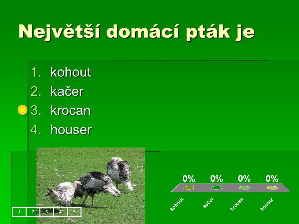 Největší domácí pták je