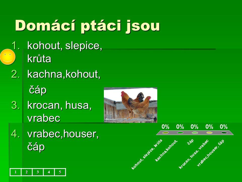 Domácí ptáci jsou kohout, slepice, krůta kachna,kohout, čáp