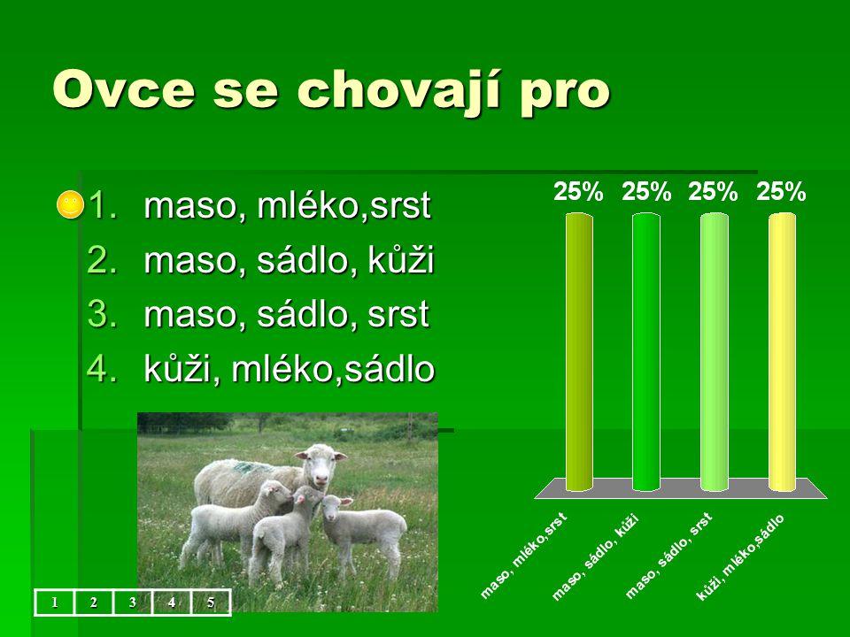 Ovce se chovají pro maso, mléko,srst maso, sádlo, kůži