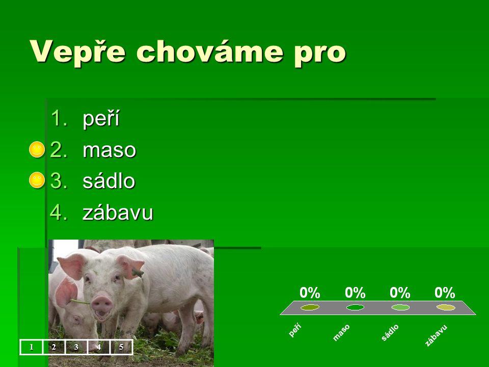 Vepře chováme pro peří maso sádlo zábavu 1 2 3 4 5