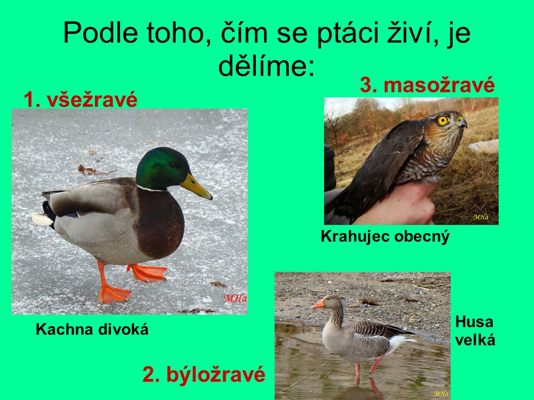 Podle toho, čím se ptáci živí, je dělíme: