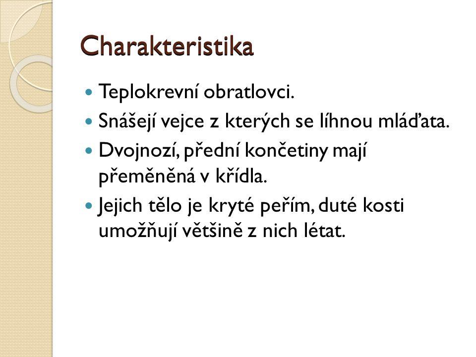 Charakteristika Teplokrevní obratlovci.