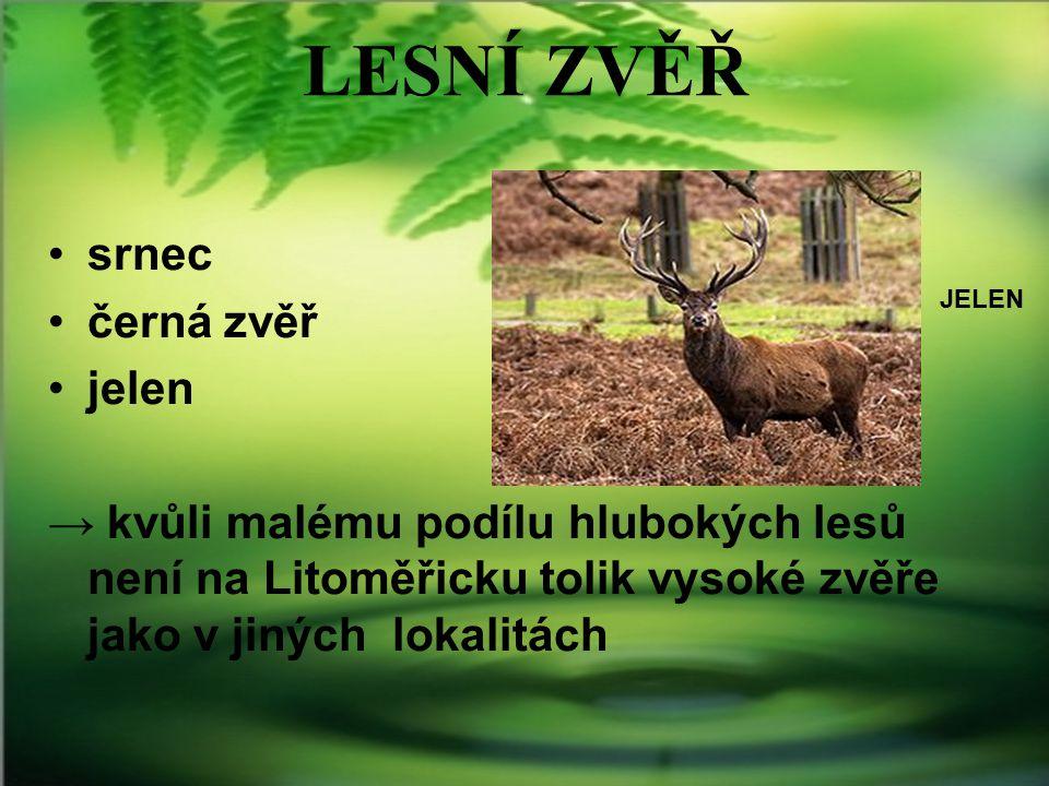 LESNÍ ZVĚŘ srnec černá zvěř jelen