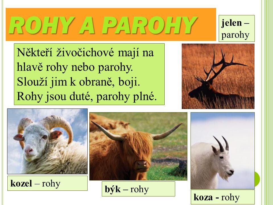 ROHY A PAROHY jelen – parohy. Někteří živočichové mají na hlavě rohy nebo parohy. Slouží jim k obraně, boji. Rohy jsou duté, parohy plné.