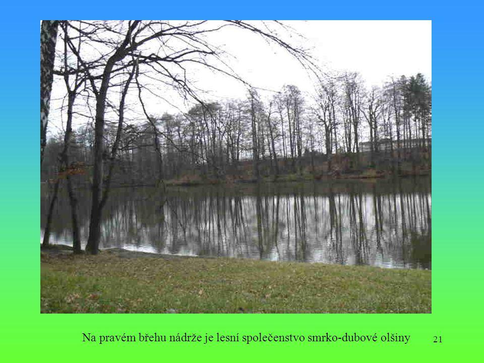 Na pravém břehu nádrže je lesní společenstvo smrko-dubové olšiny