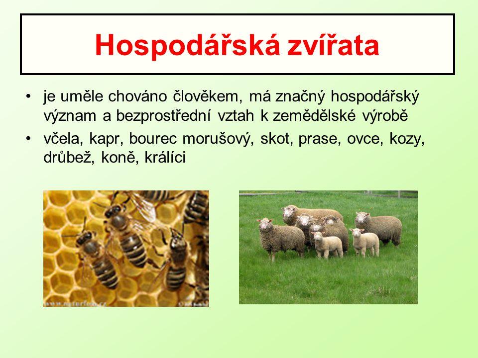Hospodářská zvířata je uměle chováno člověkem, má značný hospodářský význam a bezprostřední vztah k zemědělské výrobě.