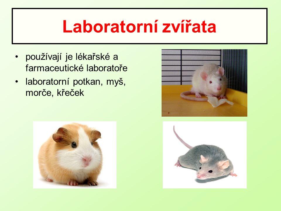 Laboratorní zvířata používají je lékařské a farmaceutické laboratoře