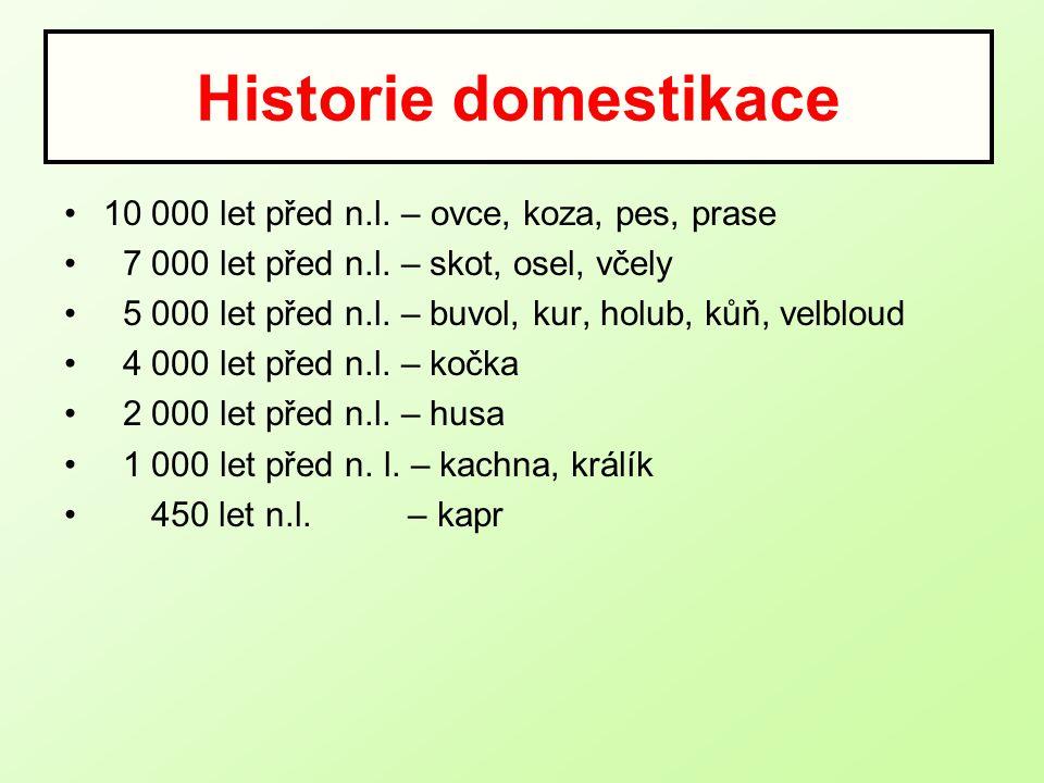 Historie domestikace 10 000 let před n.l. – ovce, koza, pes, prase