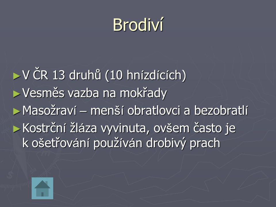 Brodiví V ČR 13 druhů (10 hnízdících) Vesměs vazba na mokřady