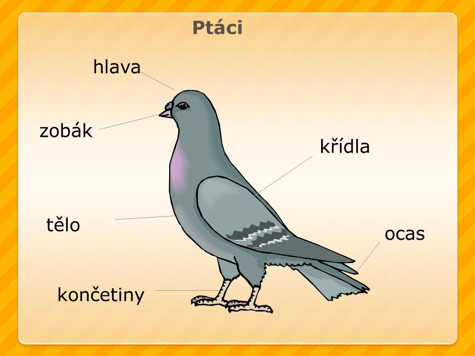 Ptáci hlava zobák křídla tělo ocas končetiny