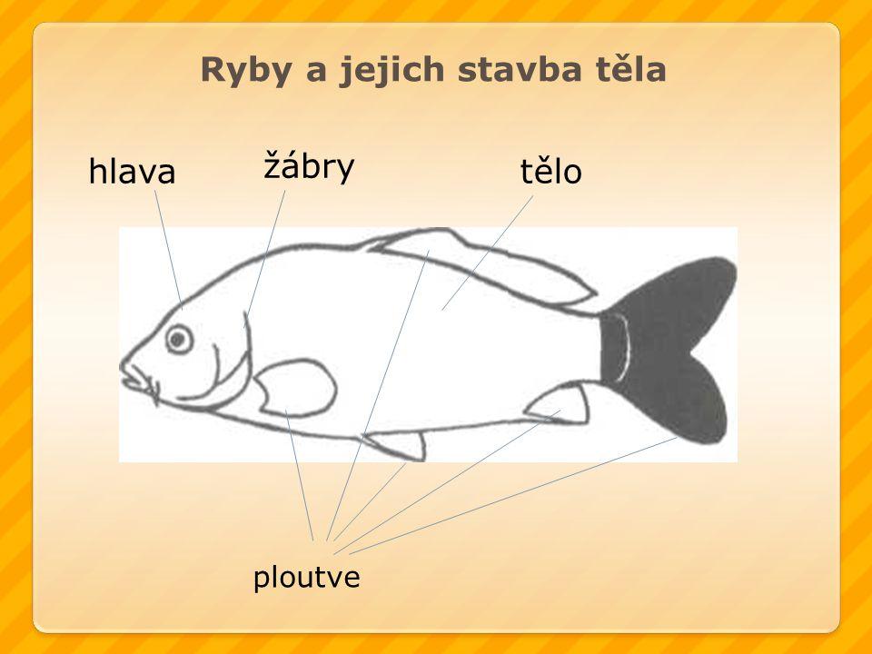 Ryby a jejich stavba těla