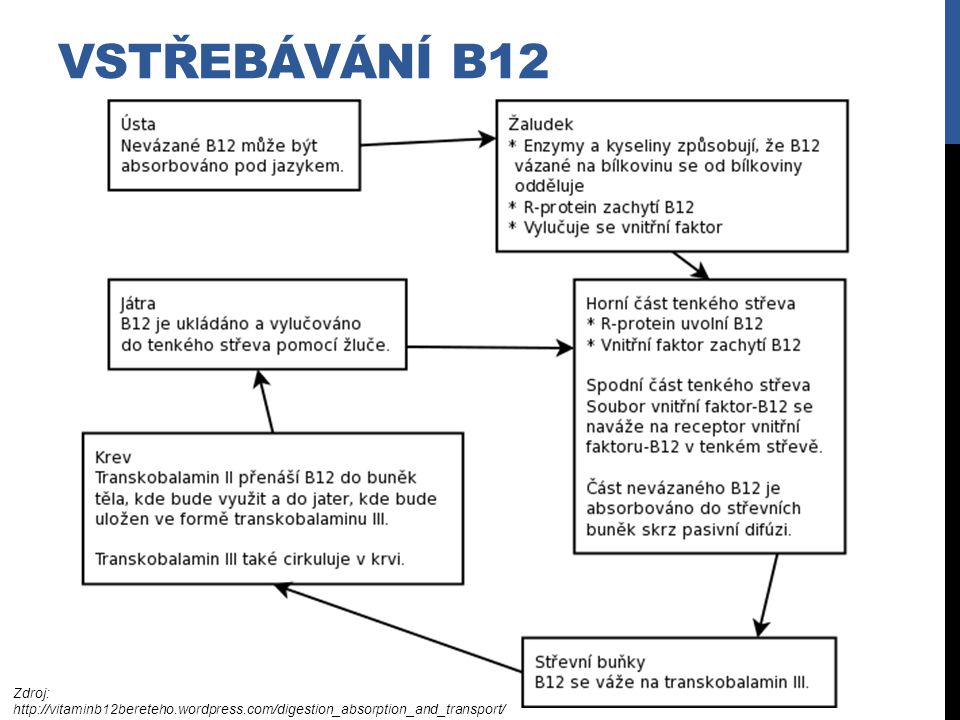 Vstřebávání B12 Zdroj: http://vitaminb12bereteho.wordpress.com/digestion_absorption_and_transport/