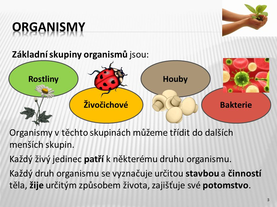 Organismy Základní skupiny organismů jsou: