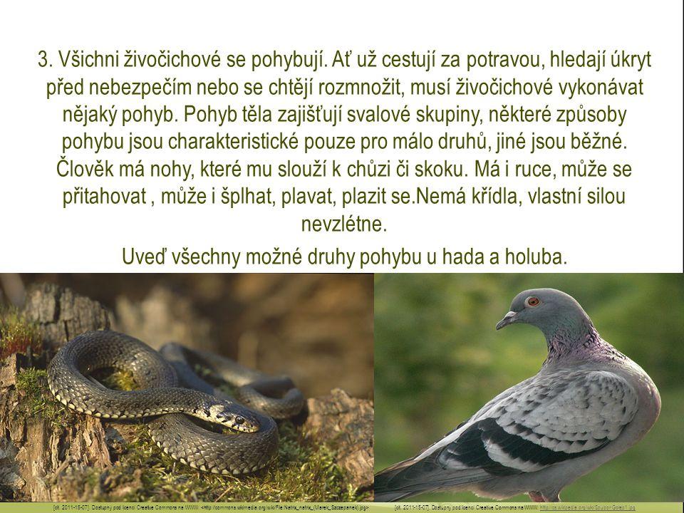Uveď všechny možné druhy pohybu u hada a holuba.