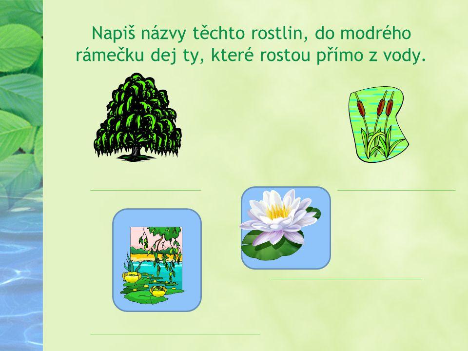 Napiš názvy těchto rostlin, do modrého rámečku dej ty, které rostou přímo z vody.