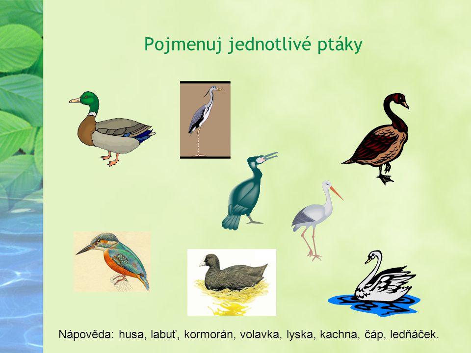 Pojmenuj jednotlivé ptáky