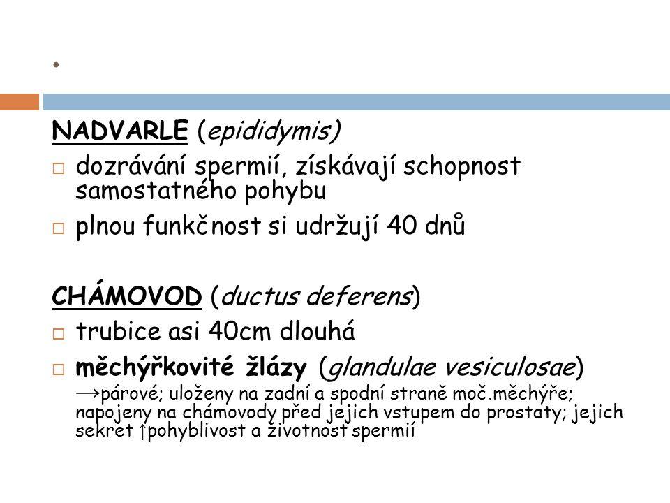 . NADVARLE (epididymis)