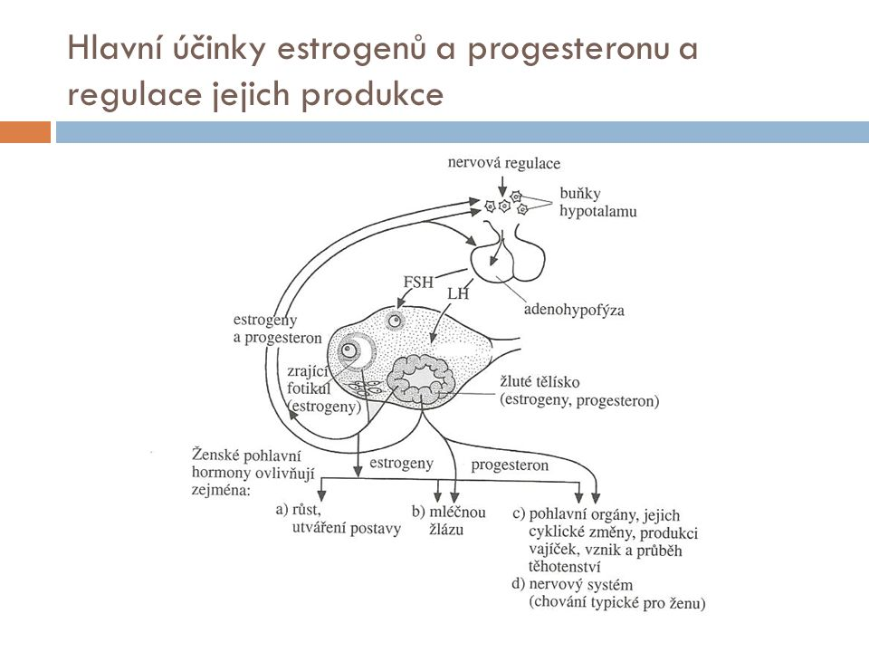 Hlavní účinky estrogenů a progesteronu a regulace jejich produkce