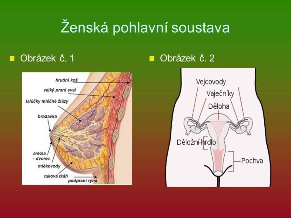 Ženská pohlavní soustava