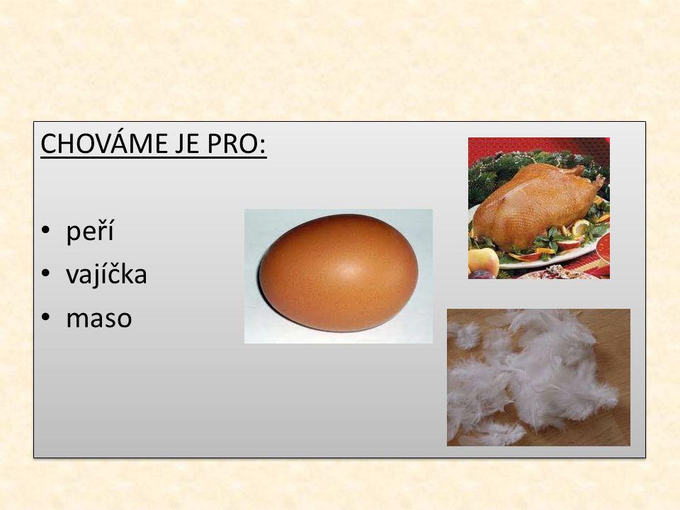 CHOVÁME JE PRO: peří vajíčka maso