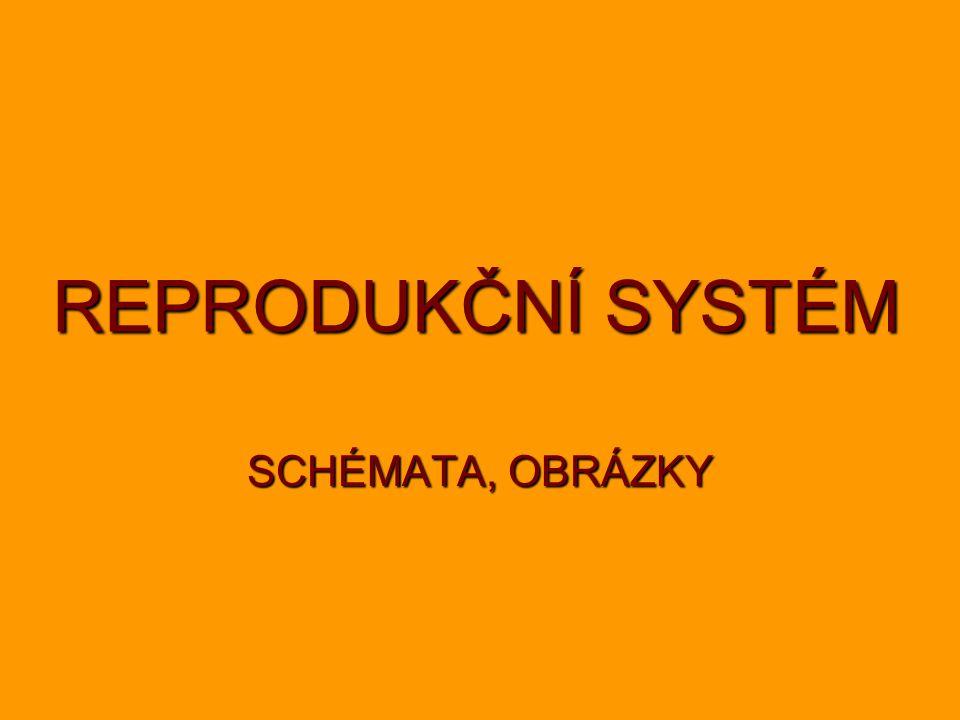 REPRODUKČNÍ SYSTÉM SCHÉMATA, OBRÁZKY