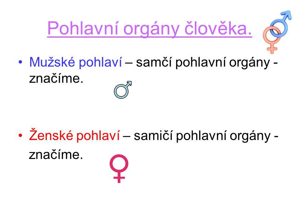 Pohlavní orgány člověka.