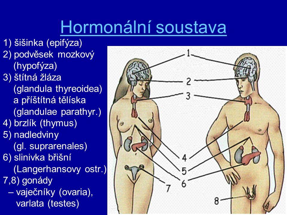 Hormonální soustava šišinka (epifýza) 2) podvěsek mozkový (hypofýza)
