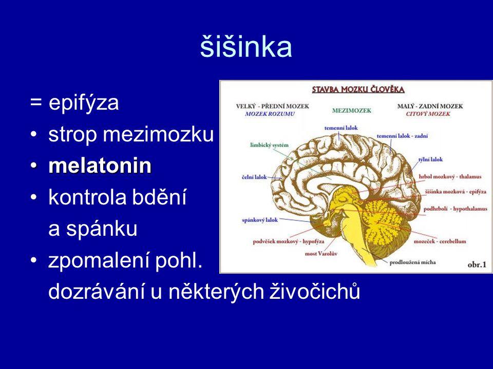 šišinka = epifýza strop mezimozku melatonin kontrola bdění a spánku