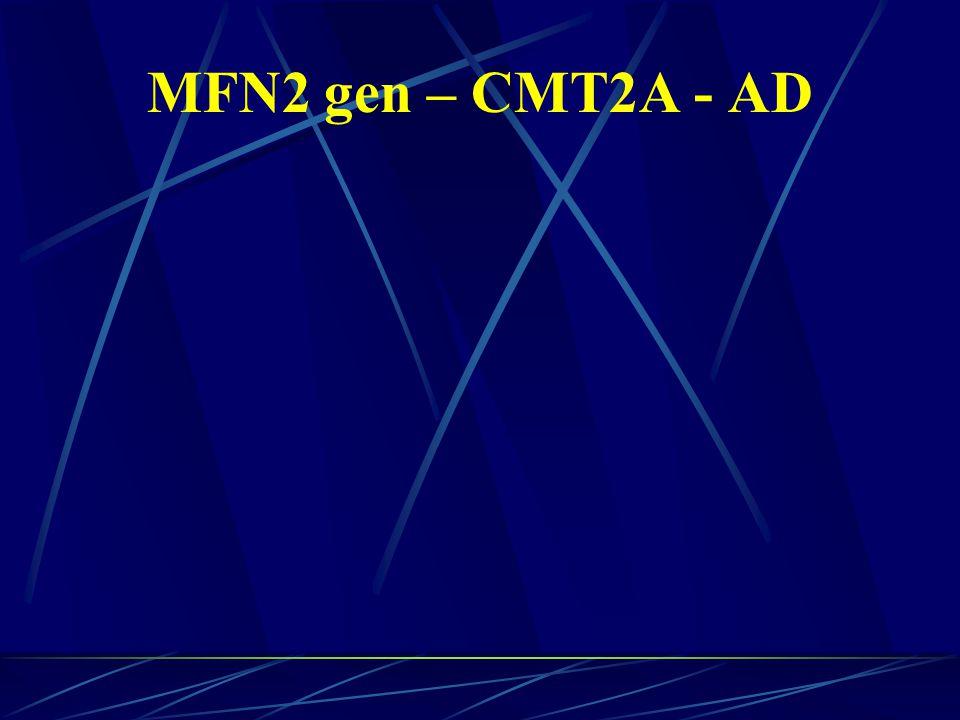 MFN2 gen – CMT2A - AD