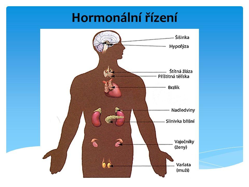 Hormonální řízení