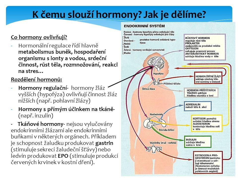 K čemu slouží hormony Jak je dělíme