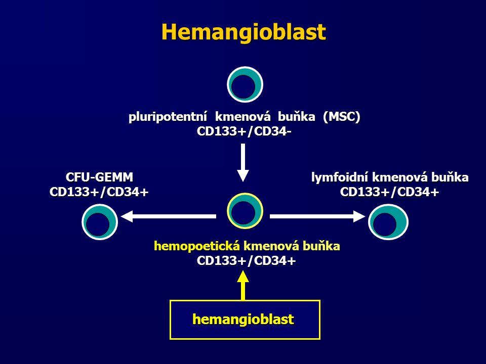 Hemangioblast hemangioblast