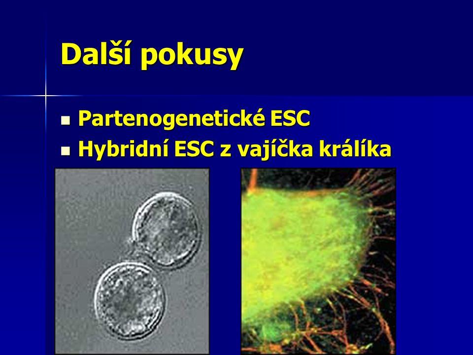 Další pokusy Partenogenetické ESC Hybridní ESC z vajíčka králíka