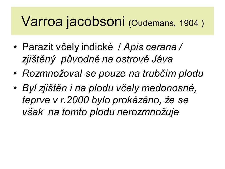 Varroa jacobsoni (Oudemans, 1904 )
