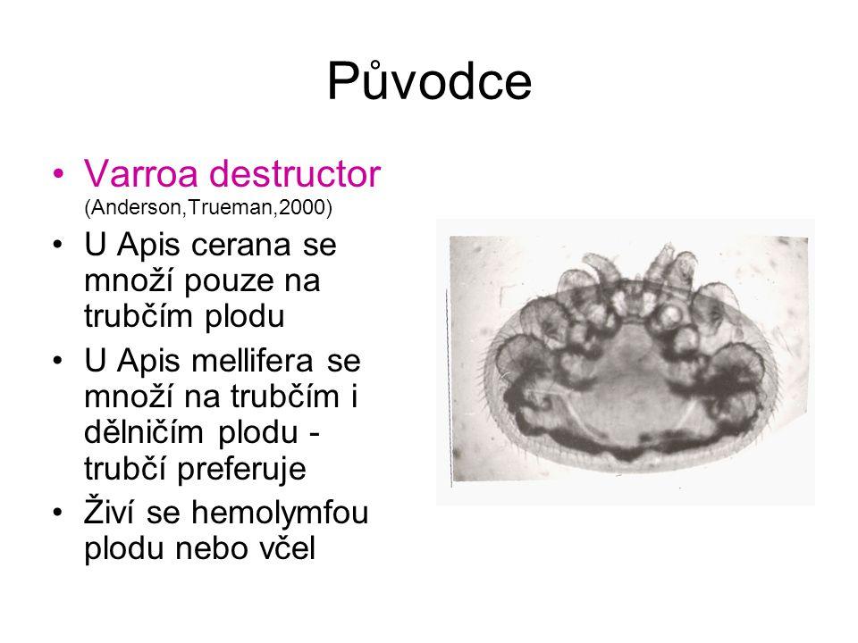 Původce Varroa destructor (Anderson,Trueman,2000)