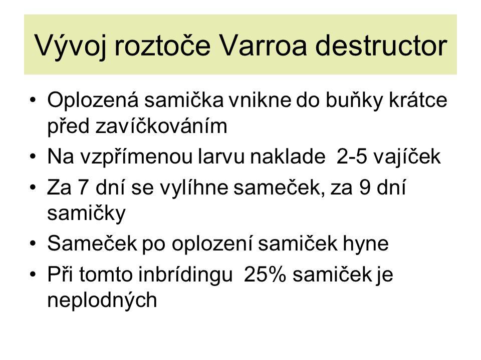 Vývoj roztoče Varroa destructor