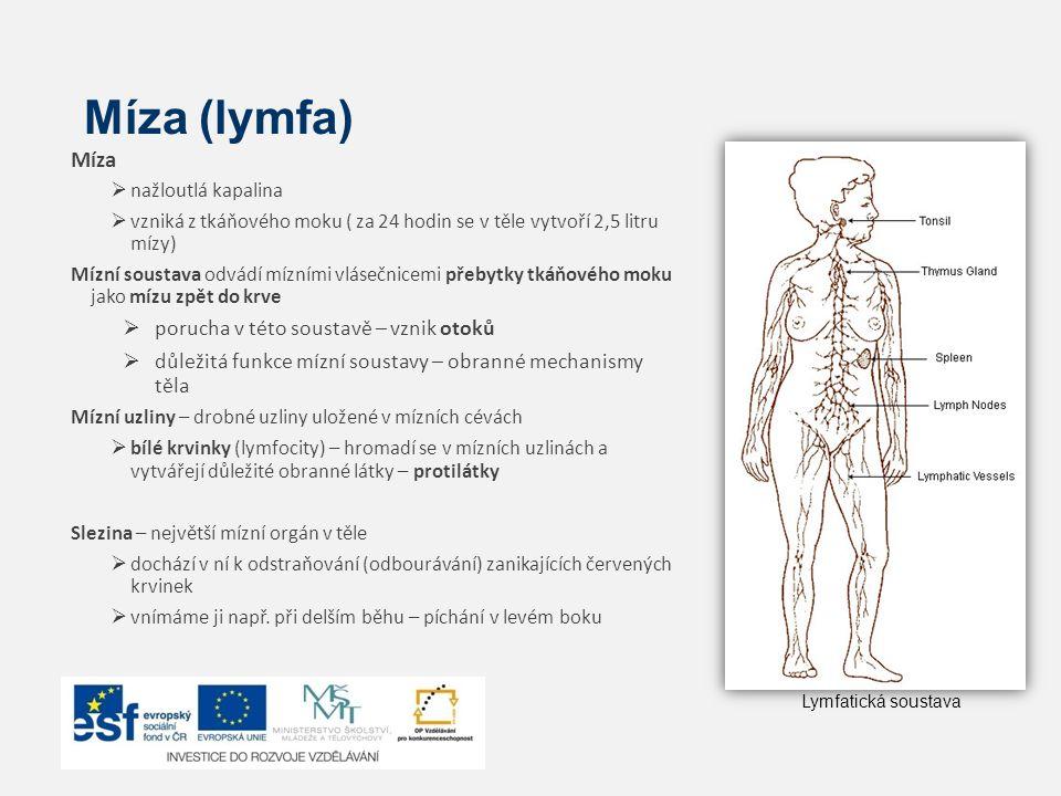 Míza (lymfa) Míza porucha v této soustavě – vznik otoků