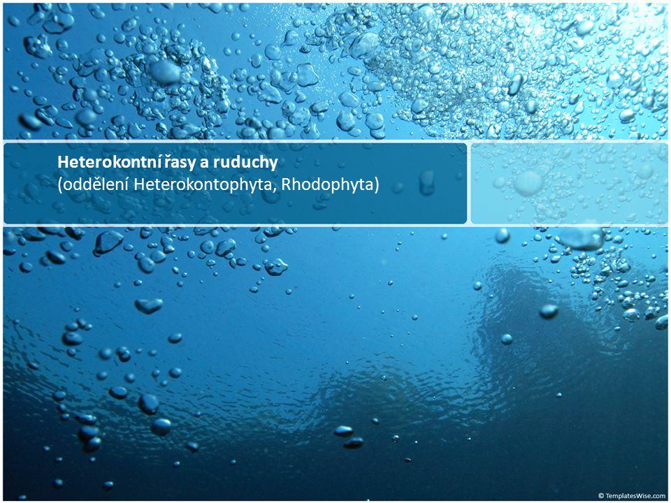 Heterokontní řasy a ruduchy (oddělení Heterokontophyta, Rhodophyta)